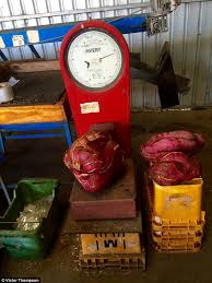 sweet potato discovered by waroona farmer weighs an incredible