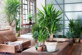 bilderrahmen dekorieren pflanzen deko wohnzimmer haus design ideen