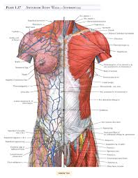 Anatomy Of Human Body Pdf A D A M Student Atlas Of Anatomy 9780521710053 Medicine