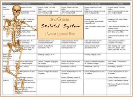 best 25 skeletal system activities ideas on pinterest skeletal
