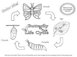 free worksheets butterfly life cycle cut and paste free math