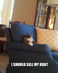 Cat Meme Boat - i should sell my boat justpost virtually entertaining