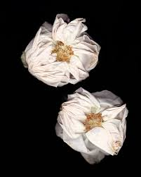 hurricane irma u0026 botanical study no 02 mel volkman