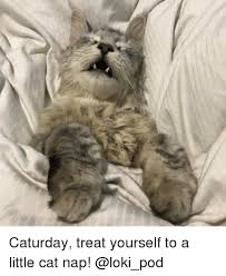 Caturday Meme - caturday treat yourself to a little cat nap caturday meme on