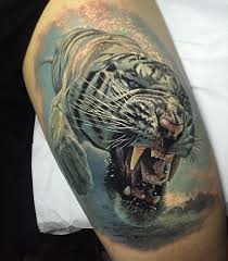 tiger swimming looking scary best design ideas