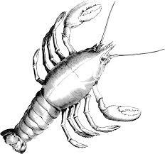 free image on pixabay lobster crab crustacean crayfish