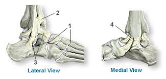 Lateral Collateral Ligament Ankle Anatomy Of The Ankle Southern California Orthopedic Institute
