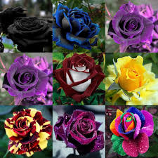 free shipping flowers beautiful new varieties flower seeds 100 seeds package home