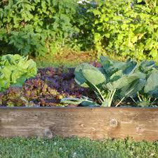 atlanta home depot black friday 2016 spring bonnie plants vegetable plants edible garden the home depot