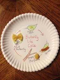 butterfly platter butterfly cycle activity education