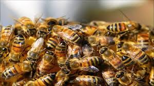 bees repellent sound one hour youtube