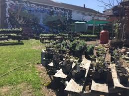 shadyside nursery small green business alliance