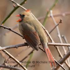 atlanta audubon atlantagaudubon twitter