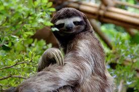 Sexy Sloth Meme - sexy sloths sexysloths4lyfe twitter
