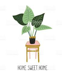 hand drawn tropical house plants scandinavian style illustration