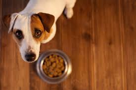 a proper balanced diet for your dog happy jack russell