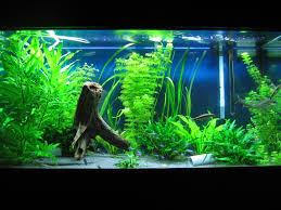 Natural Extra Aquarium Decorations — Boomer Blog Extra