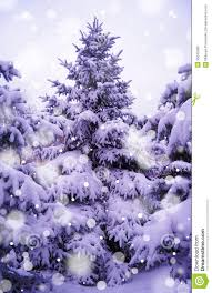 christmas trees under beautiful snow cover stock photo image
