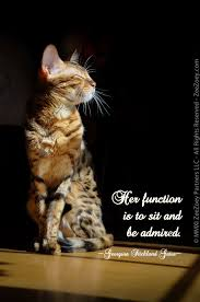 Awesome Quotes About Cats Being - an absolutely stunning picture of my zoey to accompany the quote