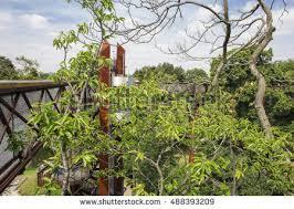 kew gardens stock images royalty free images u0026 vectors shutterstock
