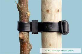 tree stakes buy tree stakes online ashridge trees