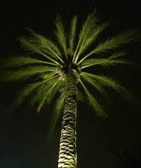 armeria outdoor landscape lighting palm tree lighting