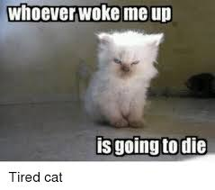 Meme Tired - whoever woke me up is going to die tired cat lolcats meme on