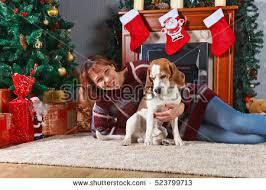 beagle room decorations stock photo 523799683