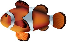 clownfish png transparent clip art image gallery yopriceville