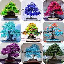 get cheap cheap small trees aliexpress alibaba