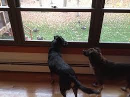 Window Seats For Dogs - k9k8 u2014 kate pineo