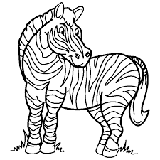 zebra coloring coloring pages kids