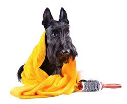perfect paws pet grooming salon and dog daycare