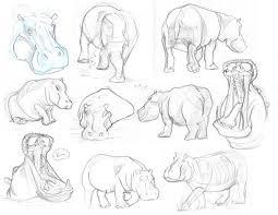 hippos amazing hippos hippos pinterest character design