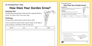 does your garden grow activity sheet worksheet