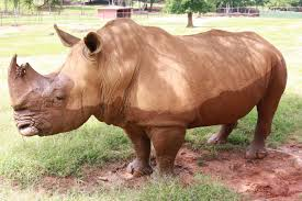 Georgia wild animals images Animal corner the rhinoceros wild animal safari georgia jpg