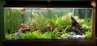 cuisine planted aquarium design ideas u2013 see here styfisher