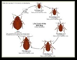 how can you get rid of bed bugs get rid of bed bugs nj nyc ct ia pa in just one day with no prep