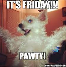 funny bichon frise quotes it u0027s friday get in friday funny dogs funny friday dogs
