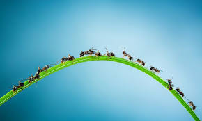 How To Find Negative Energy At Home 13 Natural Solutions For Killing And Deterring Ants Mnn Mother