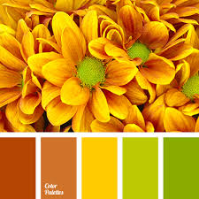 warm shades of orange color palette ideas