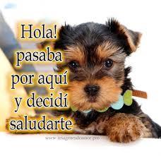 hola imagenes whatsapp de perritos con frases cortas bonitas para whatsapp