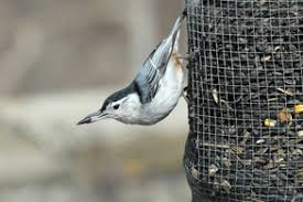 providing food for birds birds in the yard