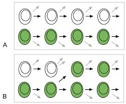 stem cell regulation in the shoot meristem journal of cell science