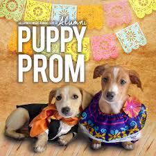 puppy thanksgiving helen woodward animal center alumni puppy prom