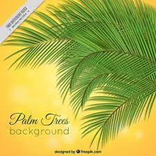 palm tree vectors photos and psd files free