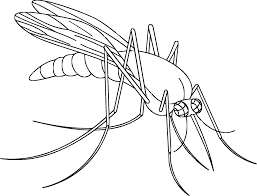 mosquito coloring drawing fly coloring page coloring page animal