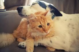 cute dog and cat wallpaper pixelstalk net