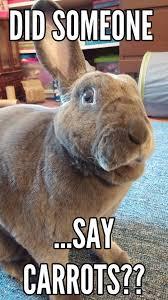 Monday Meme Images - rabbit ramblings funny bunny monday meme day