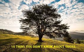 10 interesting facts about trees that you didn t cool boomsbeat